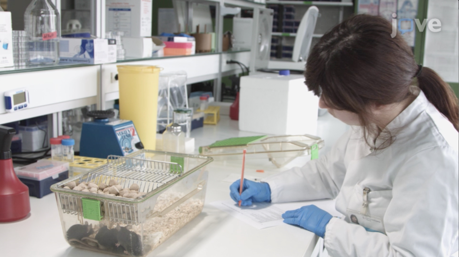 Inyección de lipopolisacárido en ratones para imitar la entrada de productos derivados de microbios después de la ruptura de la barrera Intestinal