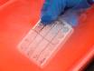 利用哺乳动物双杂交法检测雌激素受体α的配联域二维化活性