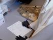 En rørledning ved hjelp av bilateral in utero elektroporasjon for å avhøre genetiske påvirkninger på gnageratferd